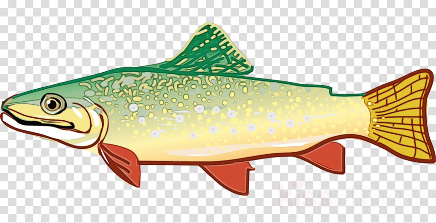 fish fish fish products trout brown trout