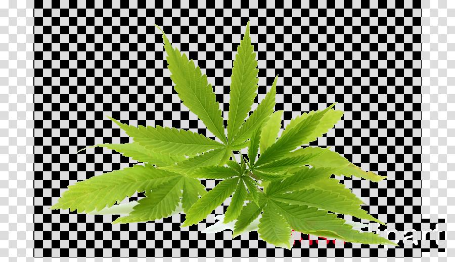 leaf plant flower herbal flowering plant