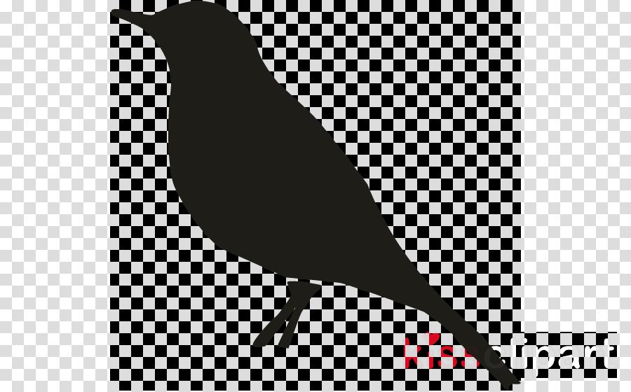 bird beak blackbird perching bird songbird