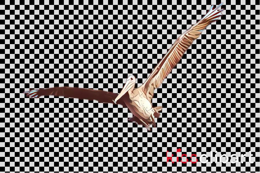 bird osprey bird of prey pelican northern harrier