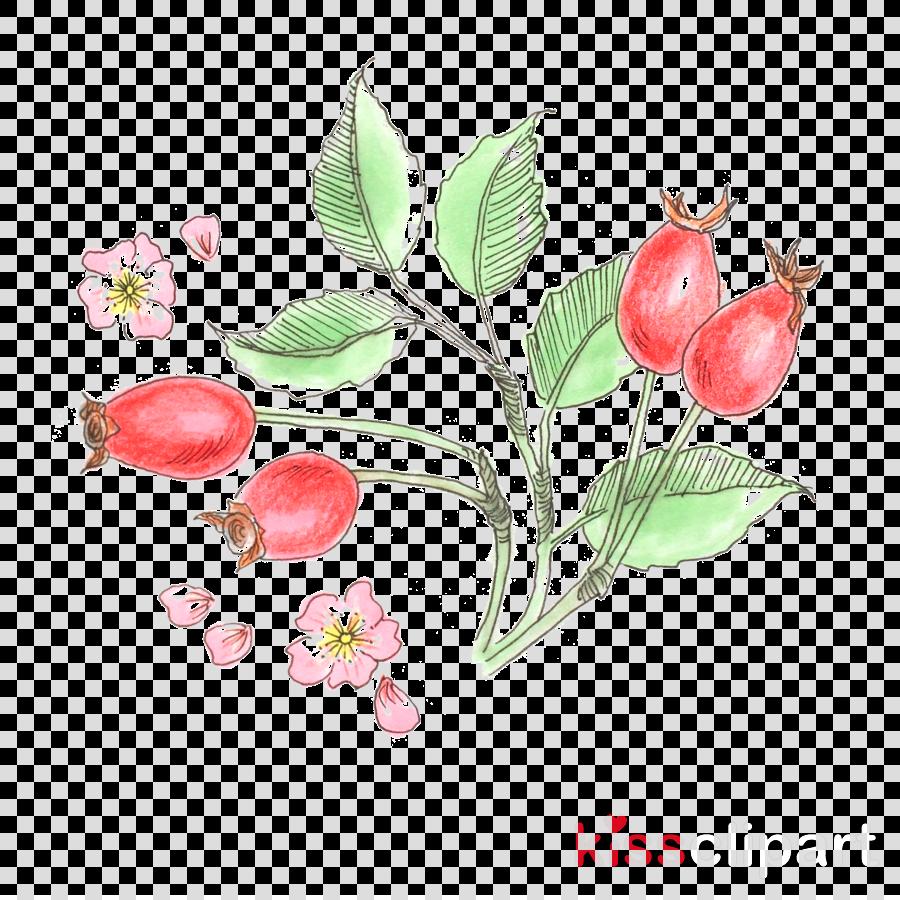 flower plant branch flowering plant rosa rubiginosa