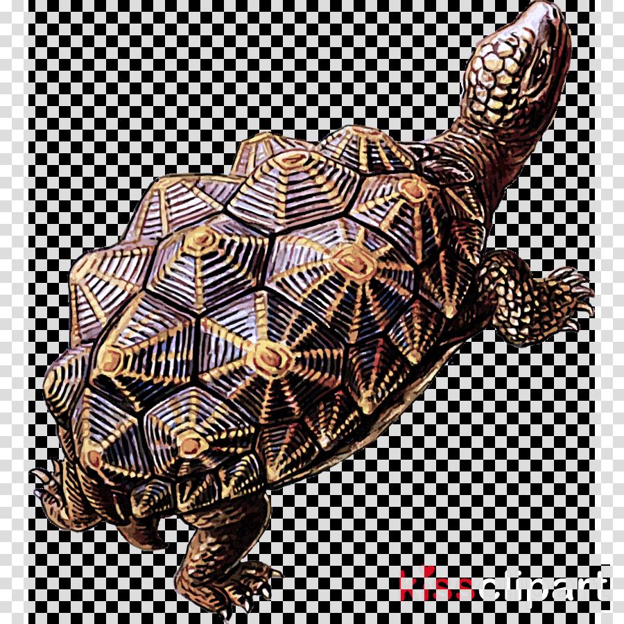 pond turtle tortoise turtle reptile terrapin