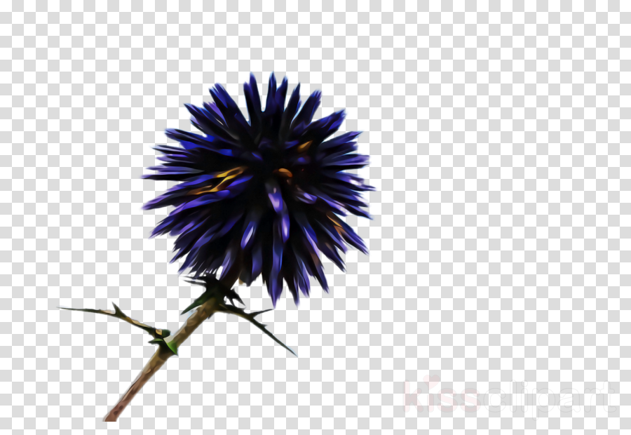 flower blue plant thistle purple