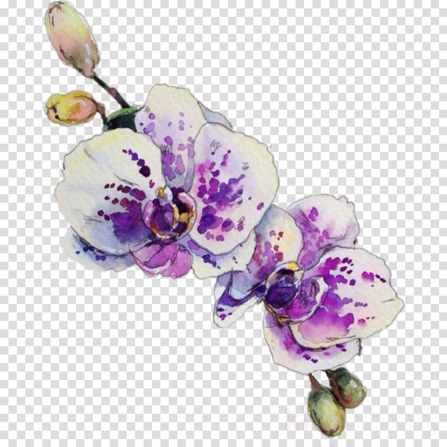flower violet plant petal moth orchid