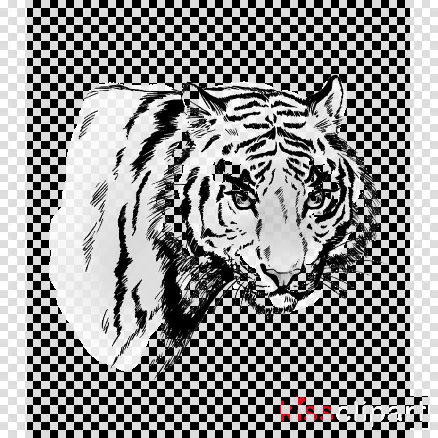 tiger bengal tiger wildlife siberian tiger head