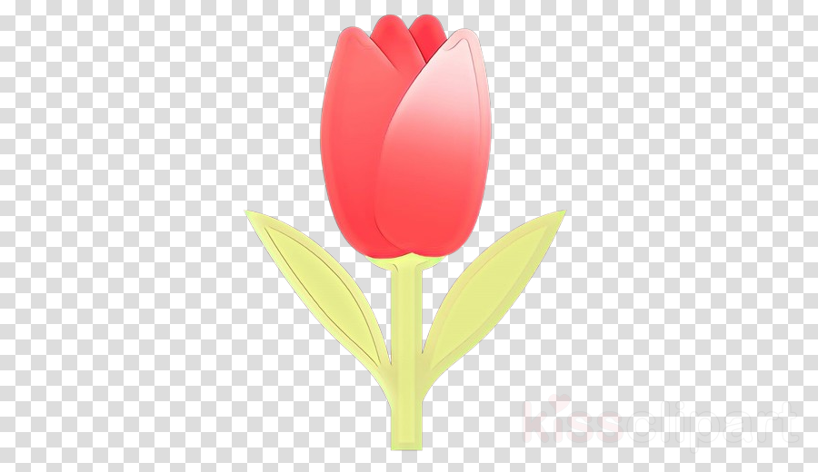 tulip petal flower red plant