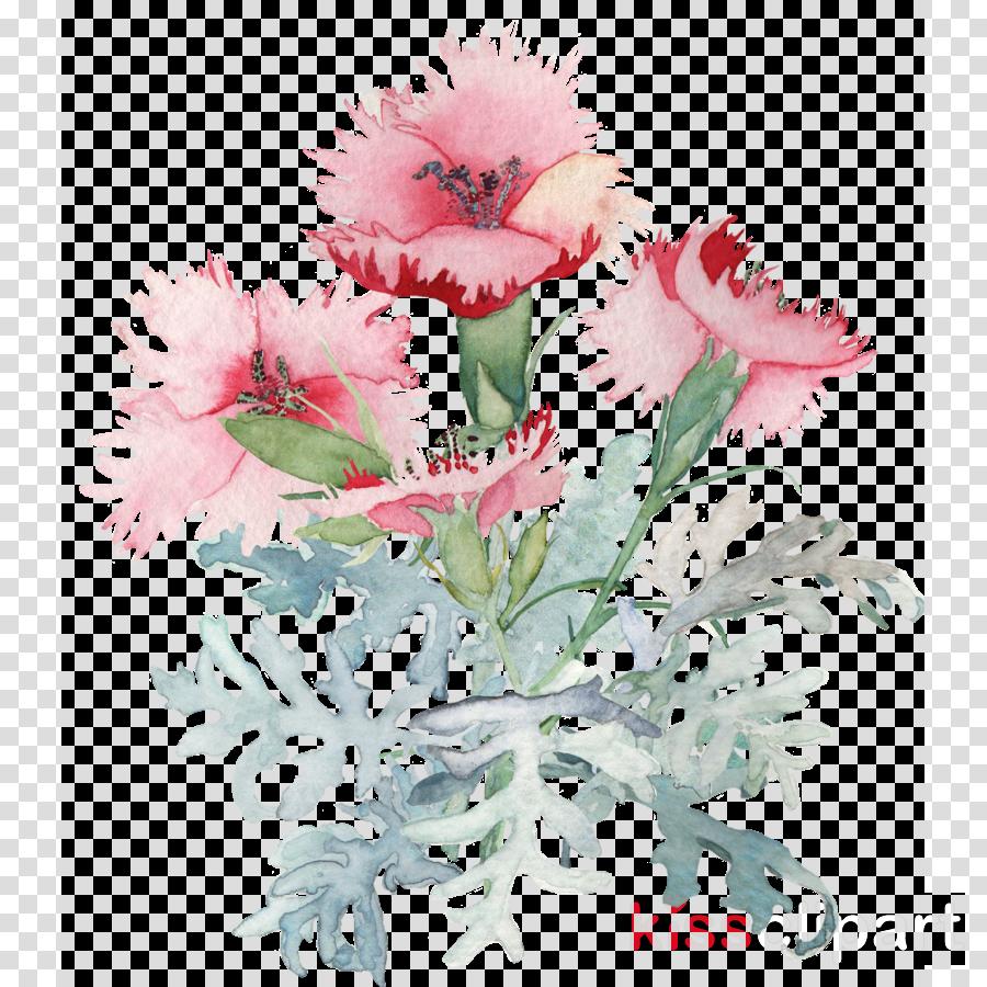 flower plant pink cut flowers carnation