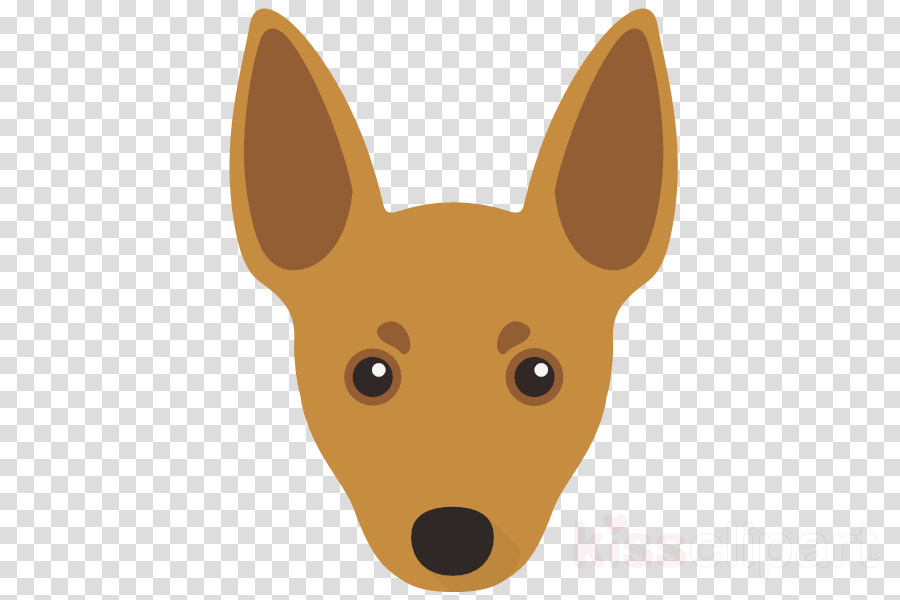 dog head chihuahua snout toy fox terrier