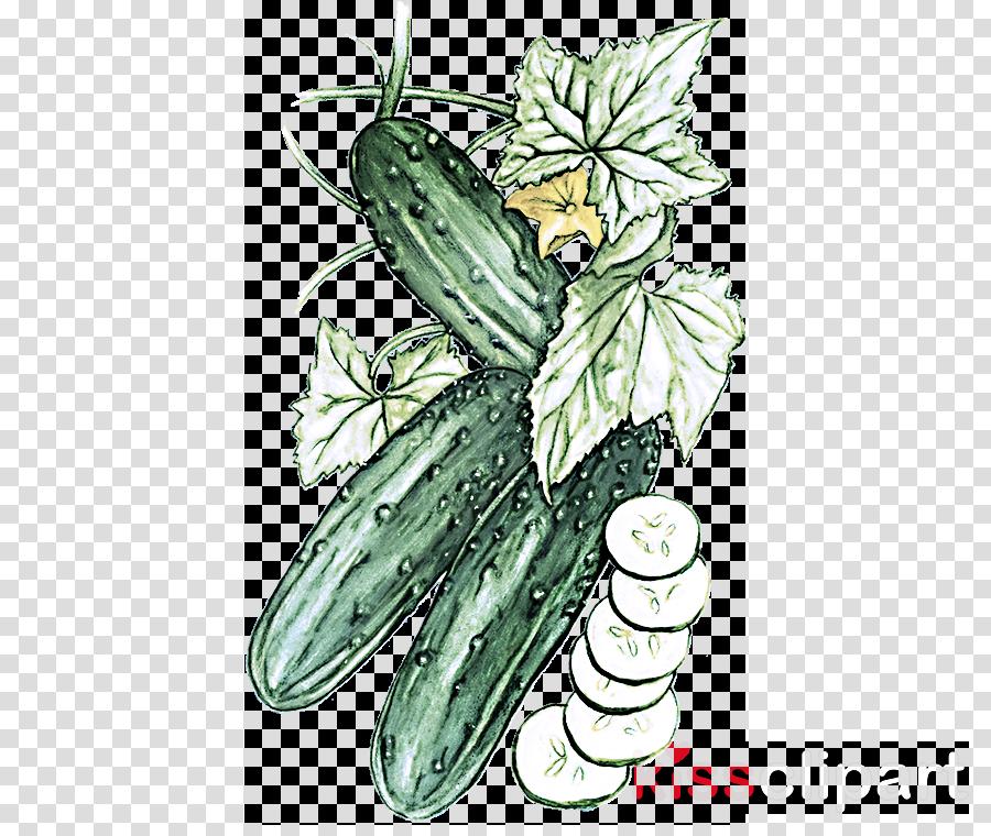 plant leaf zucchini vegetable cucumber