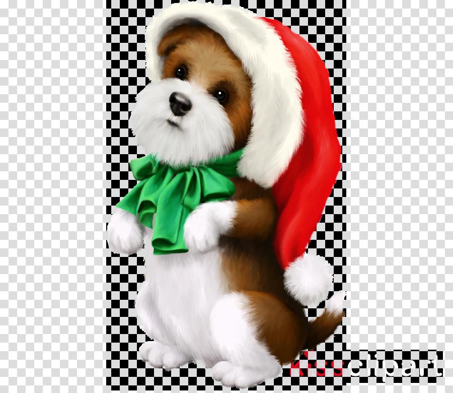 dog shih tzu puppy companion dog lhasa apso