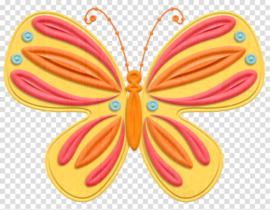 butterfly moths and butterflies insect pollinator wing