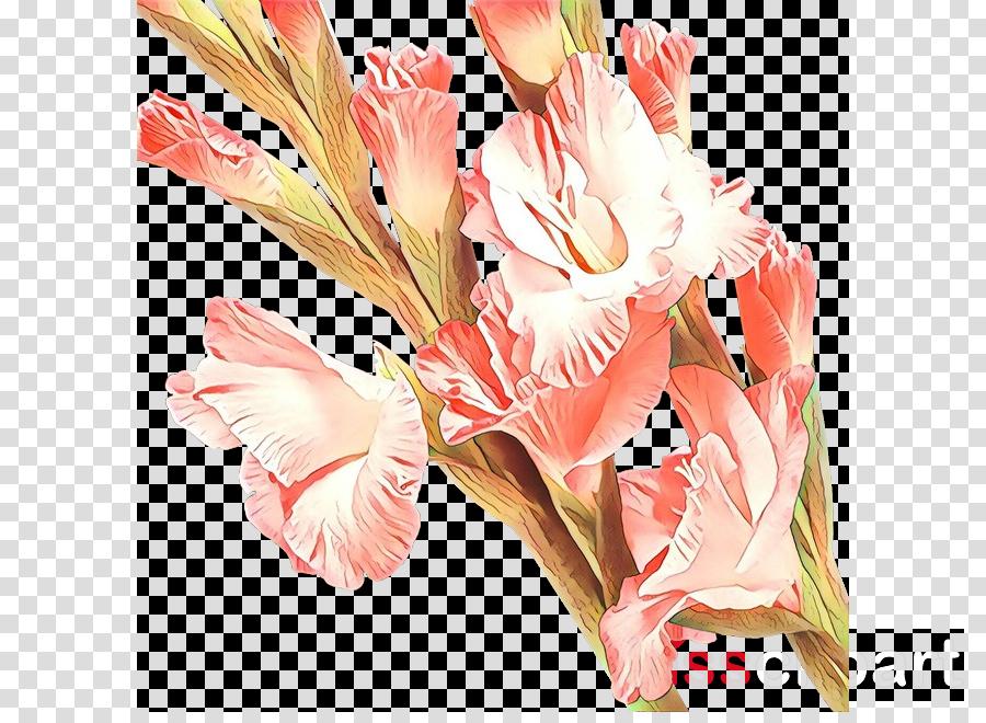 flower pink plant gladiolus cut flowers