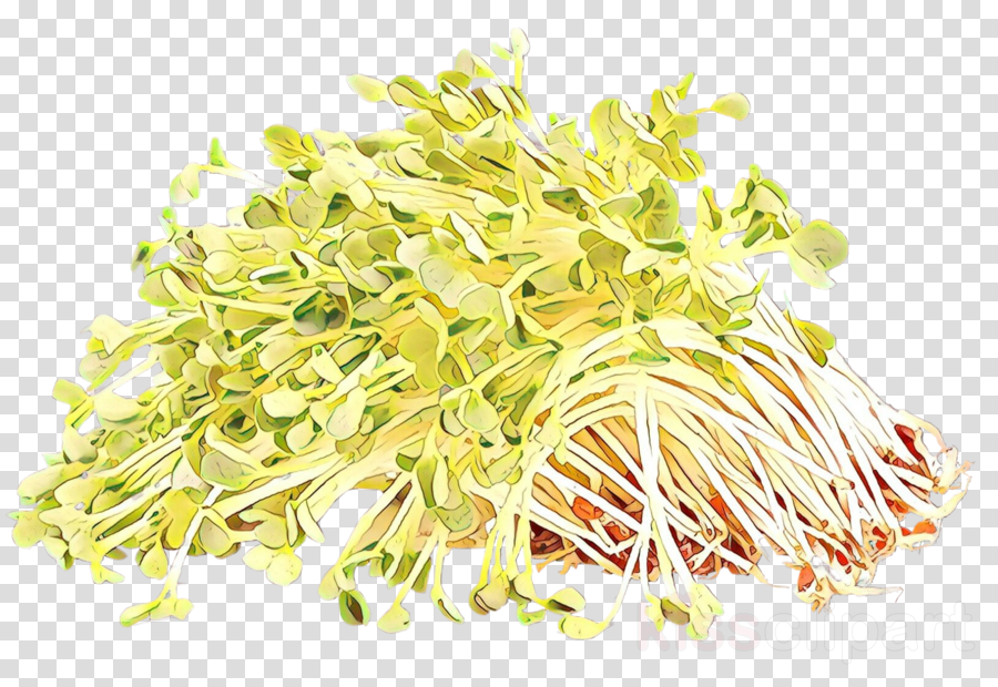 alfalfa sprouts bean sprouts sprouting plant broccoli sprouts