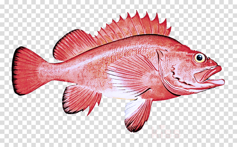 fish fish red snapper snapper pink