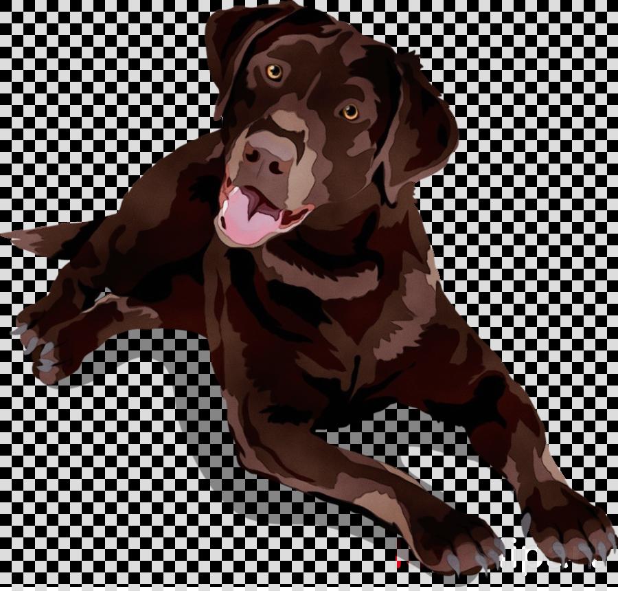 dog labrador retriever brown sporting group cane corso