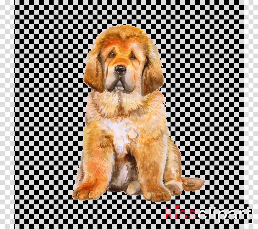 dog cocker spaniel golden retriever puppy sporting group