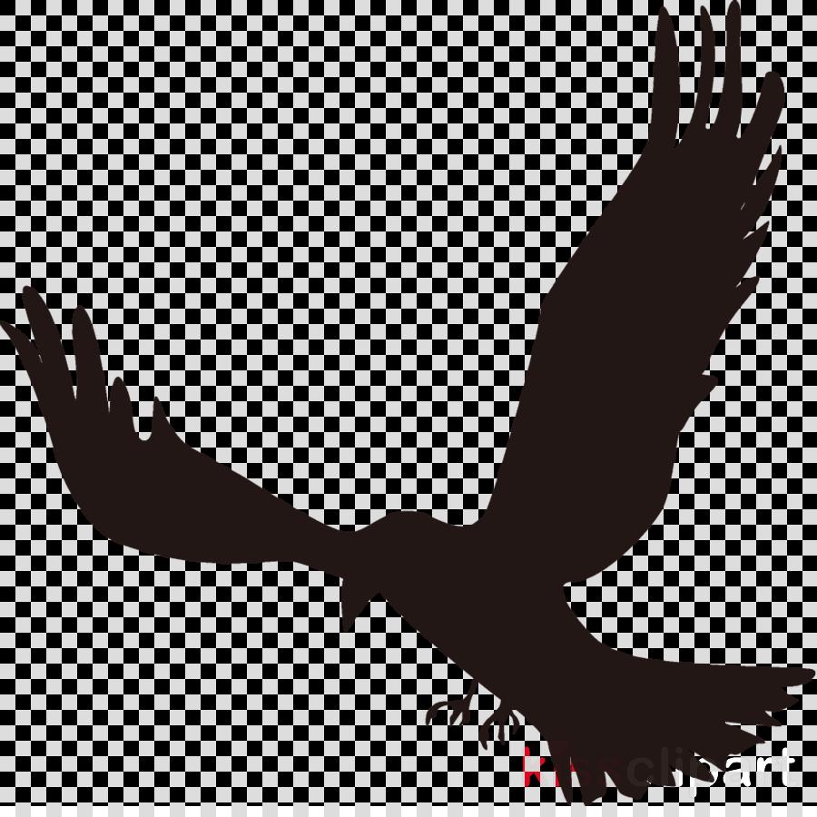 raven halloween crow