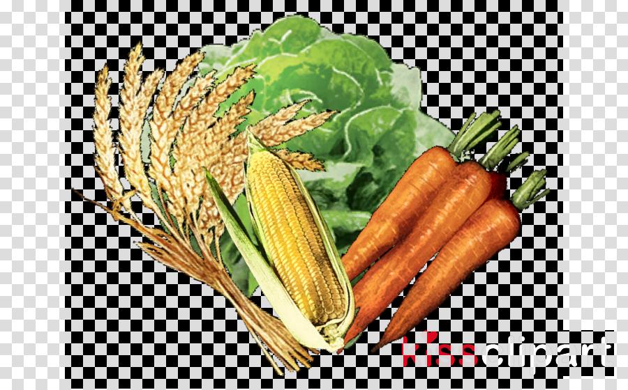 food vegetable plant natural foods carrot