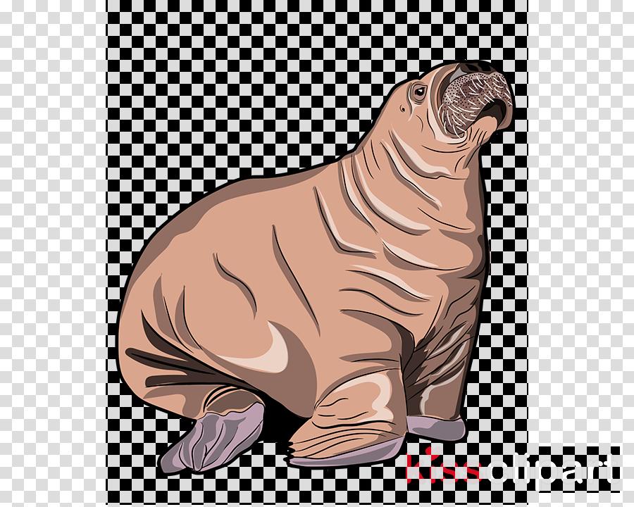 seal california sea lion steller sea lion walrus fur seal