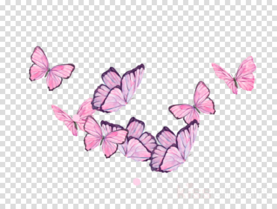 butterfly pink moths and butterflies insect pollinator