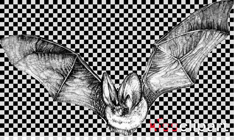 Bat Drawing Pictures Carinewbi