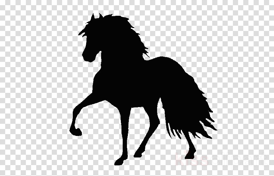 horse hair mane black stallion
