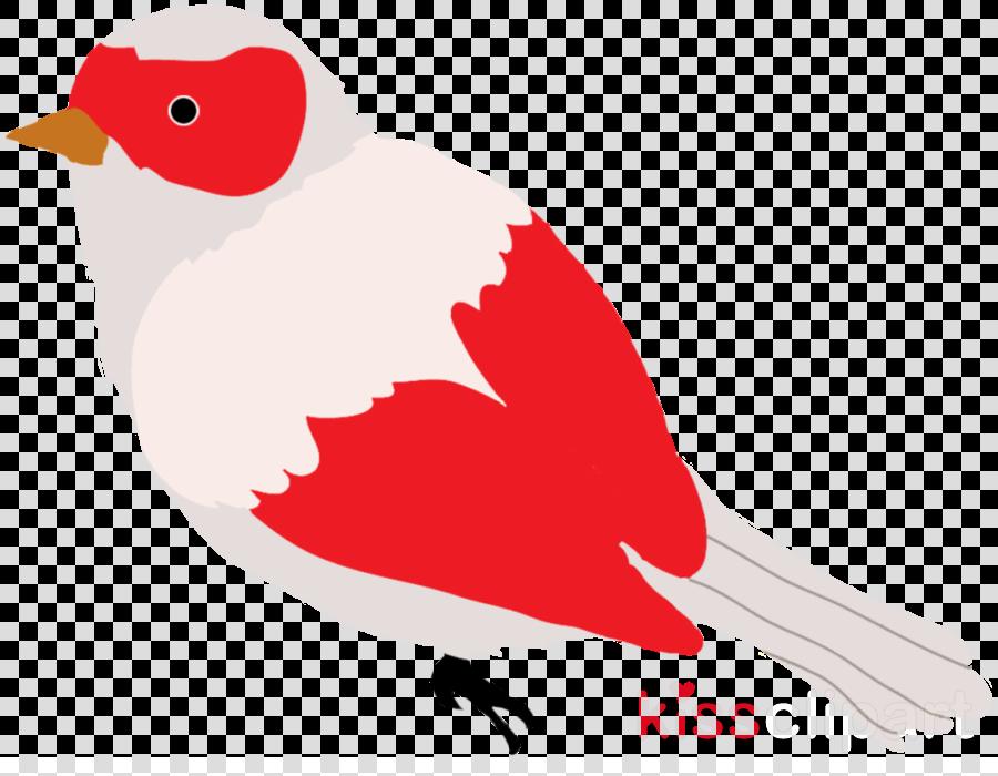 bird beak european robin songbird perching bird