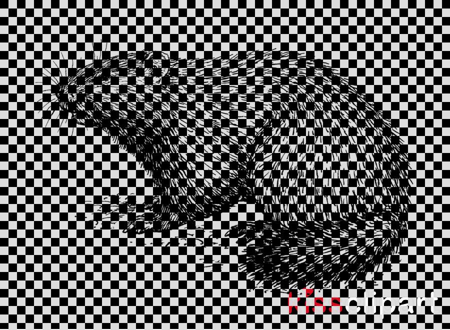 groundhog rat beaver snout gerbil