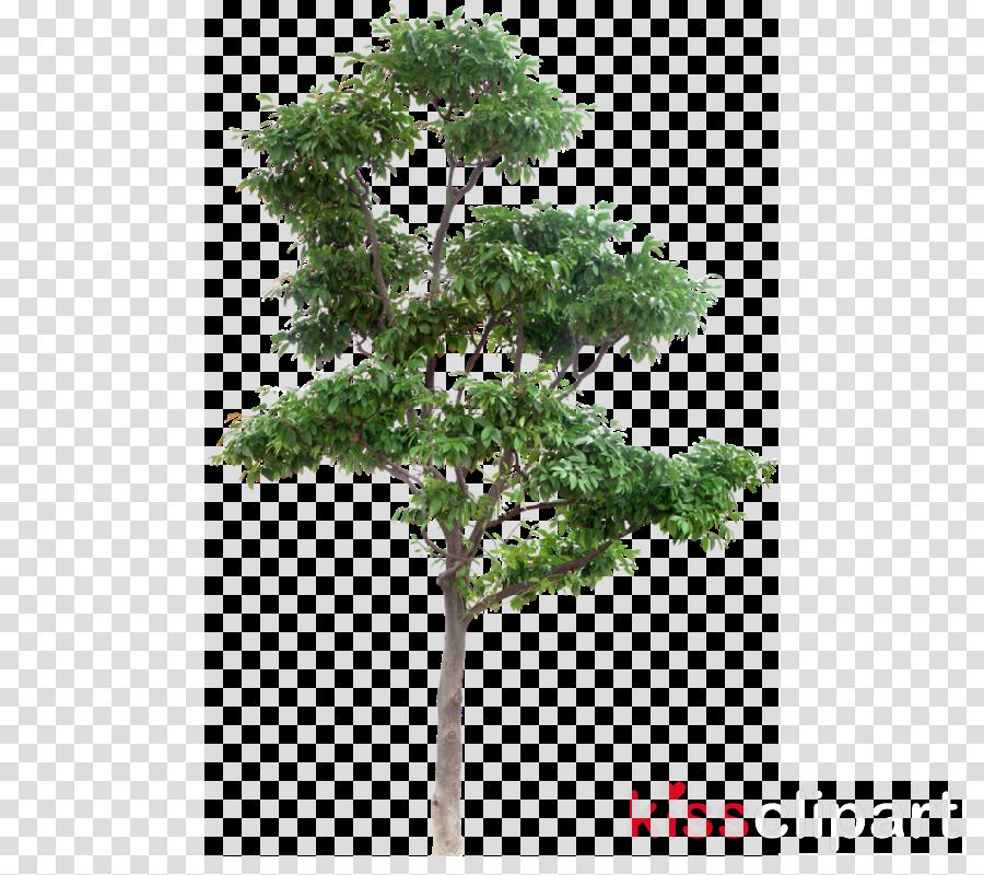 tree plant woody plant flower leaf