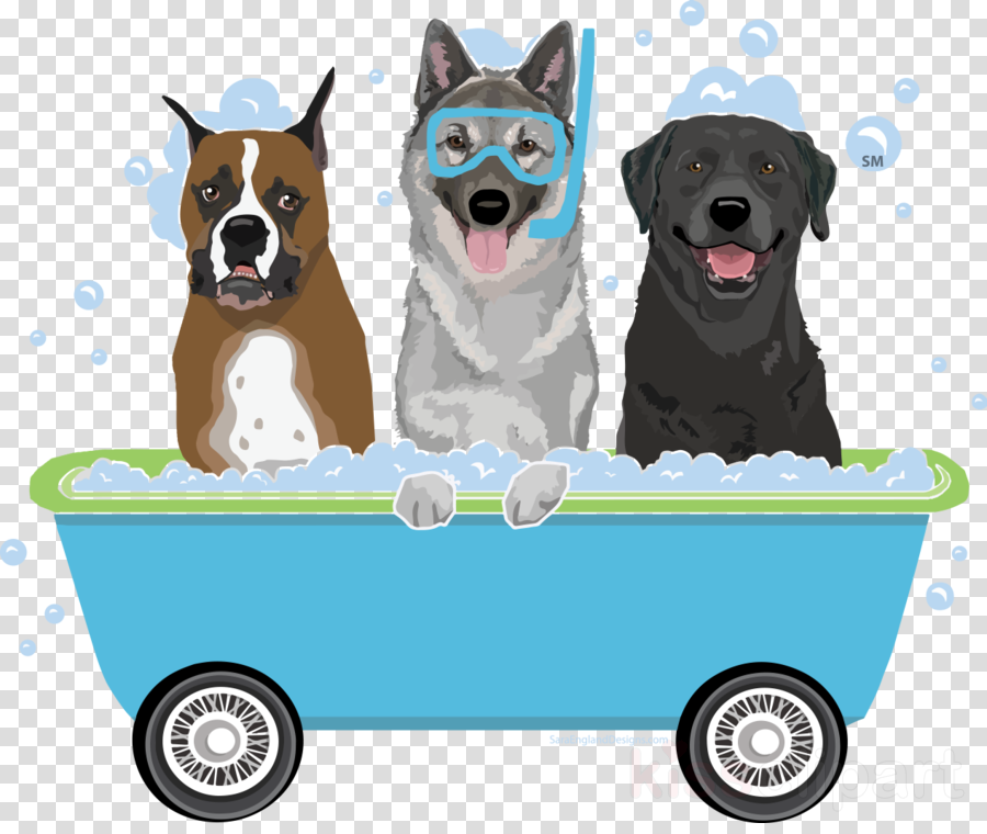 dog sporting group pembroke welsh corgi vehicle working dog