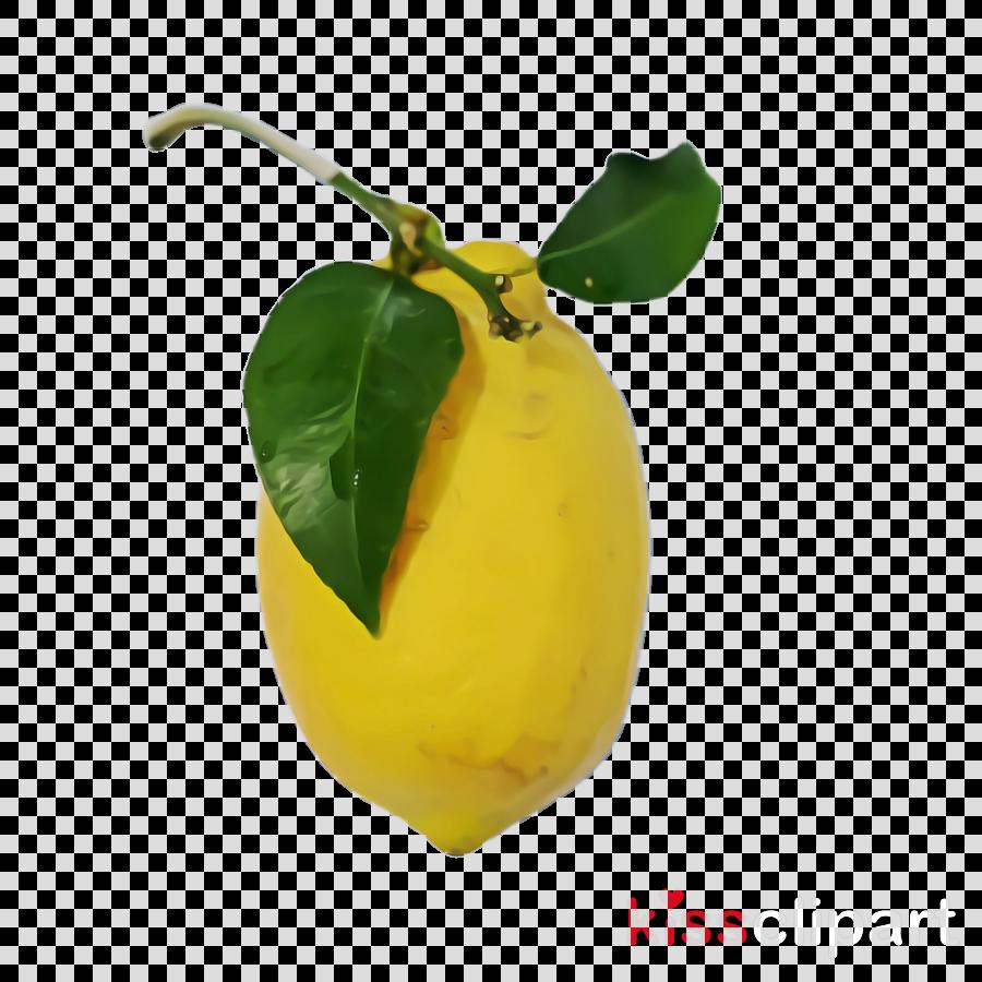 yellow plant fruit food leaf