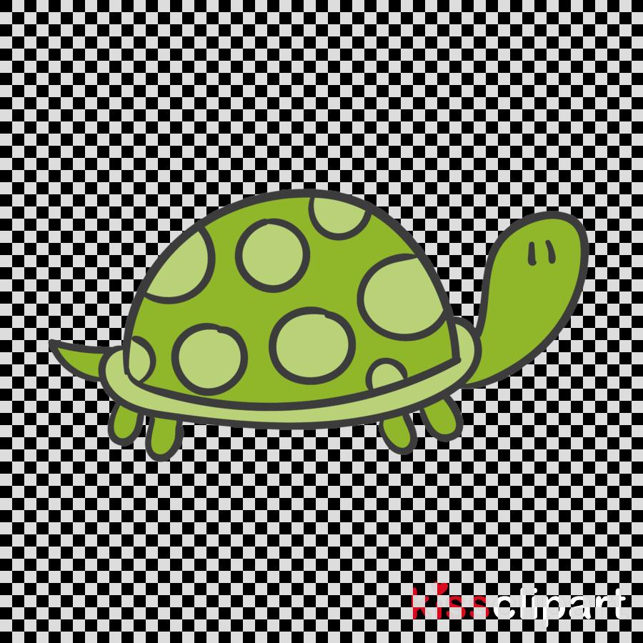 green turtle tortoise sea turtle pond turtle