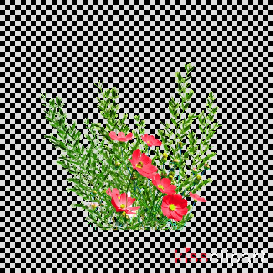 flower plant grass leaf cut flowers