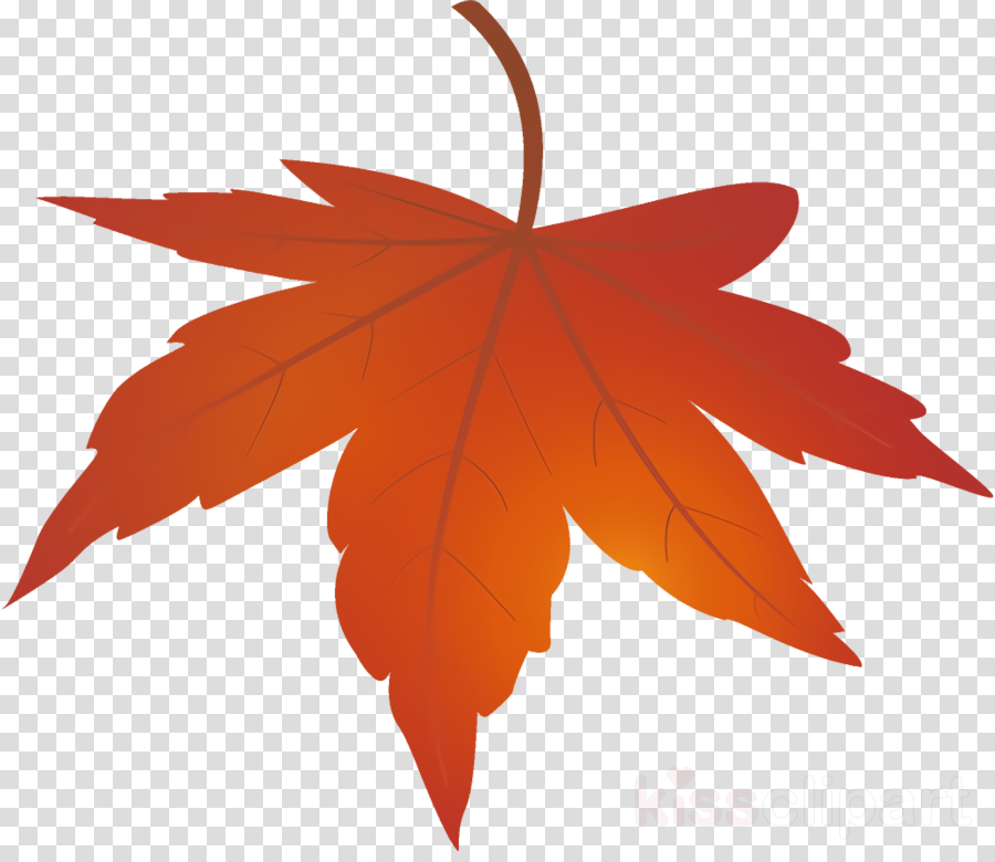 maple leaf autumn leaf yellow leaf