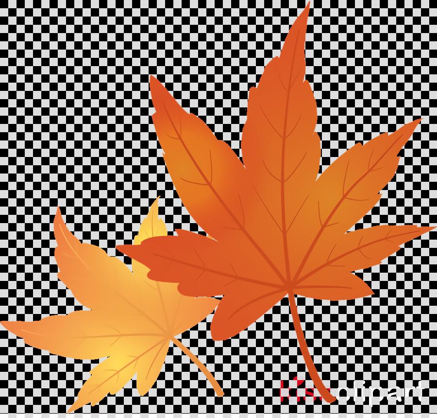 maple leaves autumn leaves fall leaves