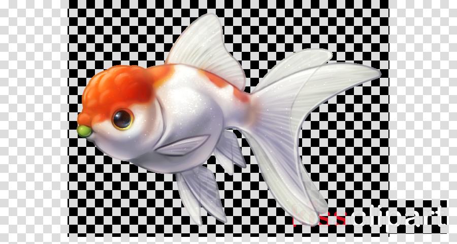 fish fish goldfish fin feeder fish