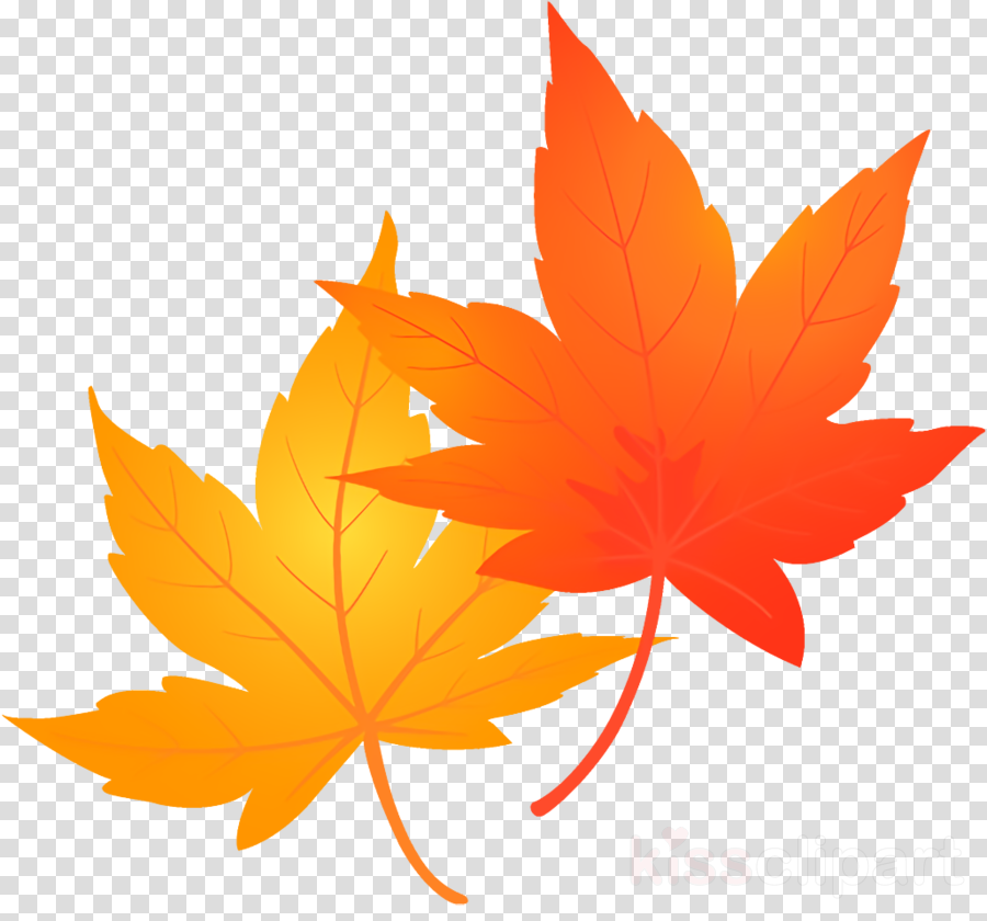 maple leaves autumn leaves fall leaves