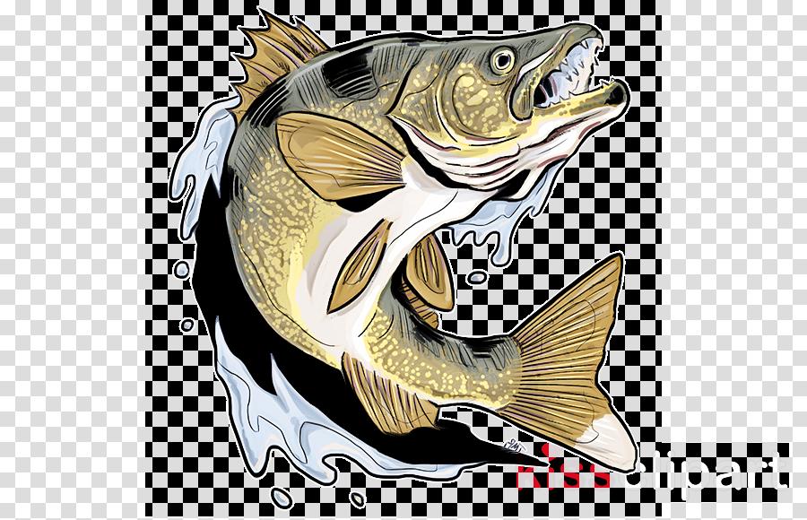 fish bass fish pike carp