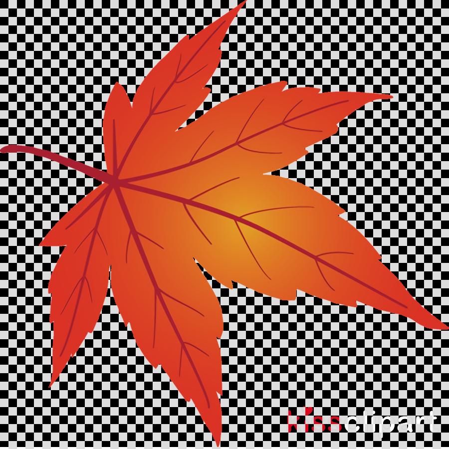 maple leaf fallen leaf dead leaf