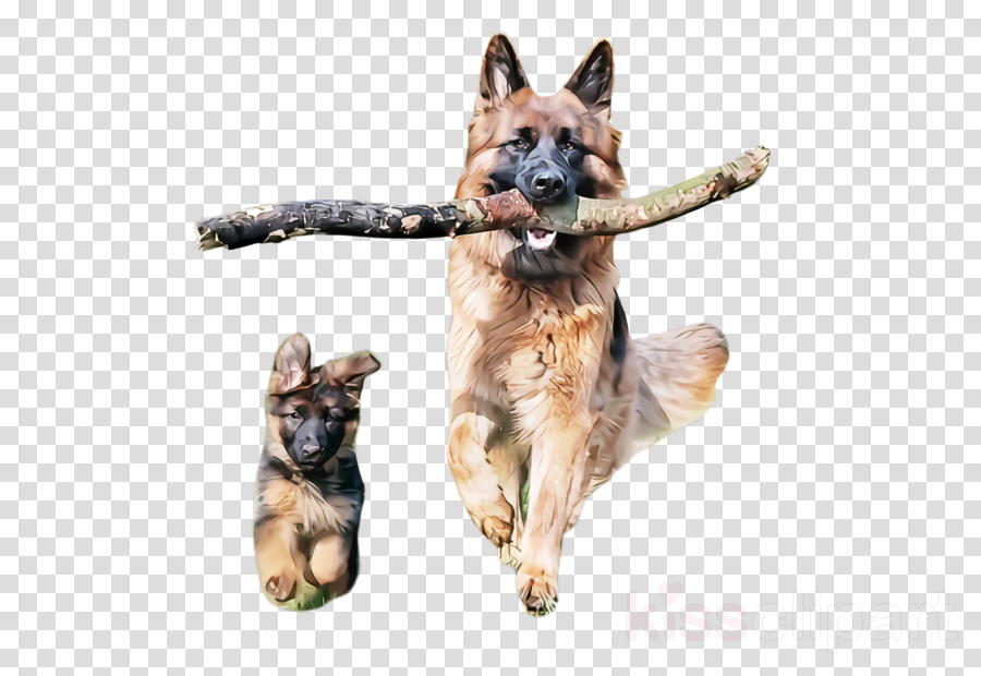 dog german shepherd dog king shepherd old german shepherd dog kunming wolfdog