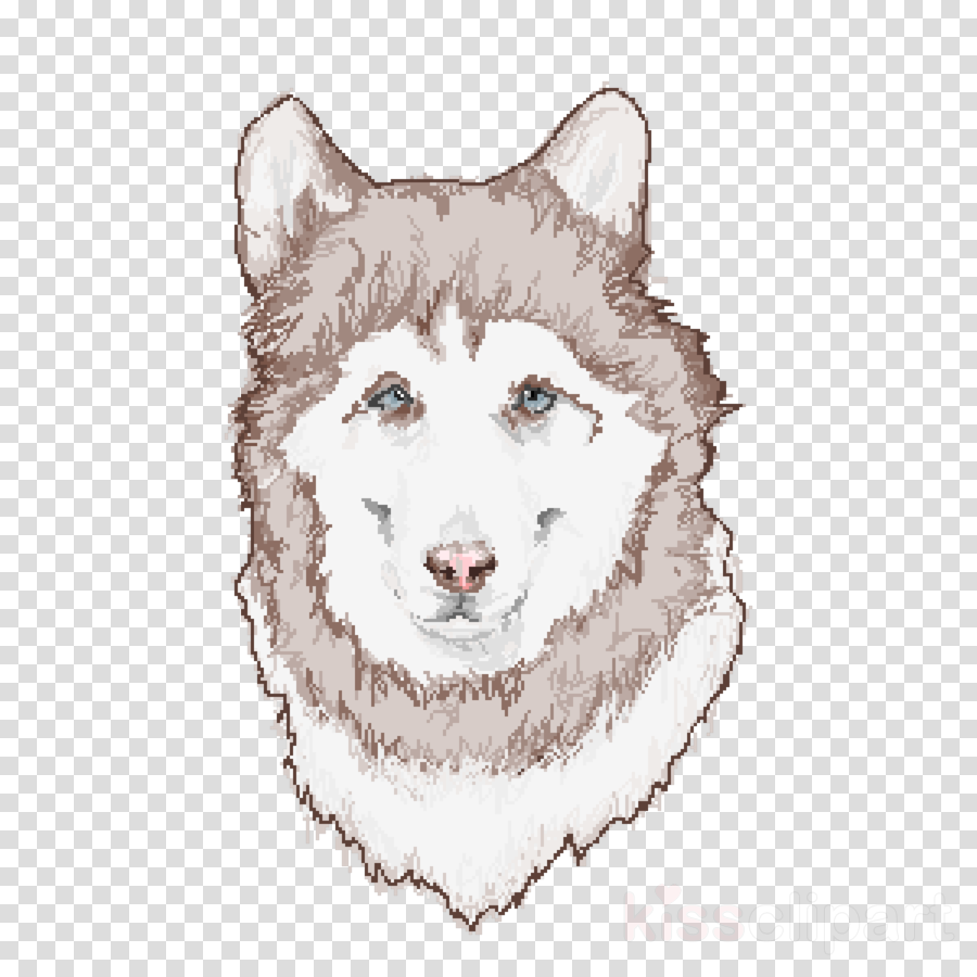 dog alaskan malamute siberian husky head canadian eskimo dog