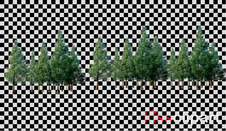 shortleaf black spruce tree lodgepole pine natural environment vegetation