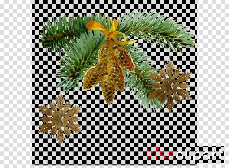 columbian spruce sugar pine shortleaf black spruce yellow fir tree