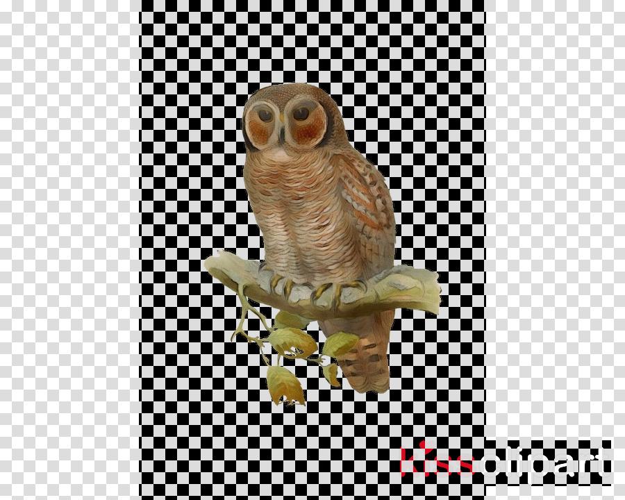 owl bird bird of prey barn owl figurine