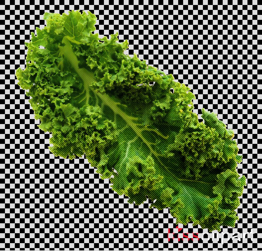 leaf vegetable vegetable lettuce leaf food