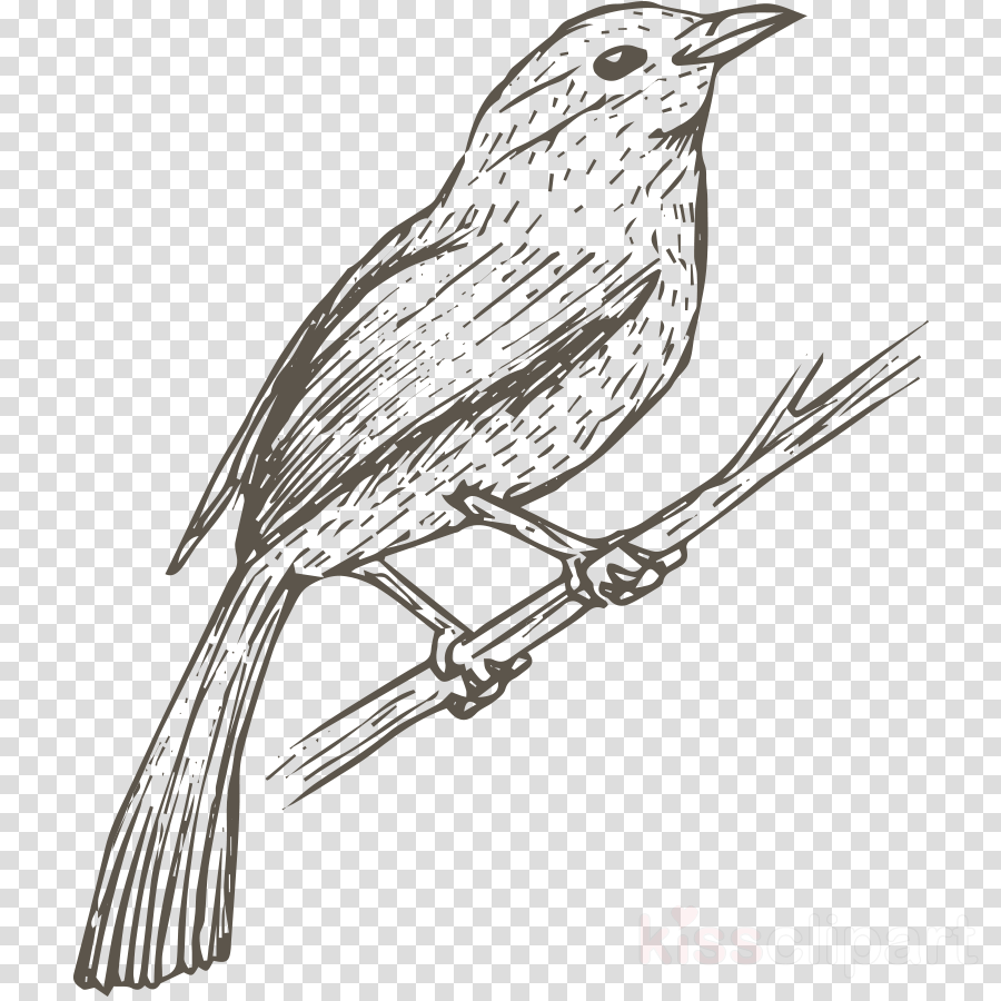 bird beak coloring book drawing songbird