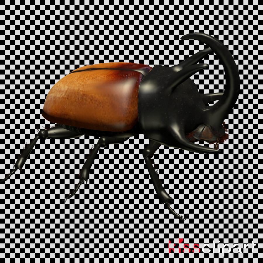 insect elephant beetle japanese rhinoceros beetle beetle rhinoceros beetle