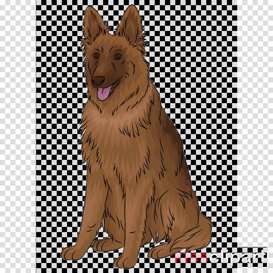 dog german shepherd dog bohemian shepherd tervuren