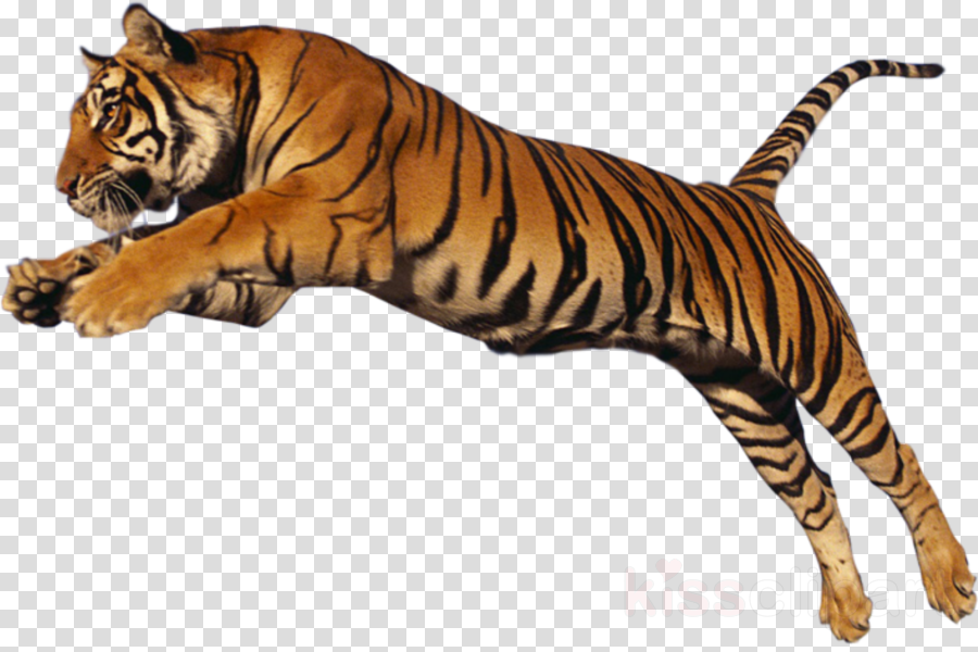 tiger bengal tiger wildlife siberian tiger animal figure