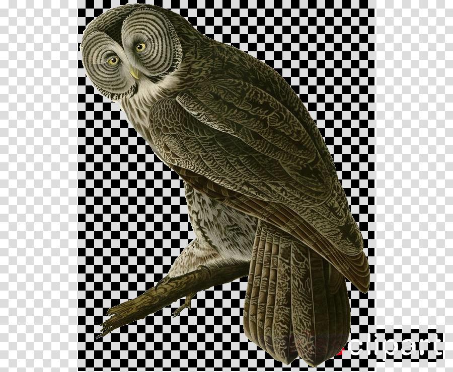 bird owl bird of prey parrot beak